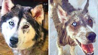 До и После Когда Забрали Собаку Из Приюта