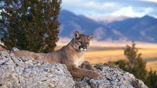 Самые опасные животные Северной Америки. Дикая природа. Документальный фильм.