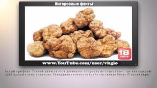 Самые дорогие блюда мира   Интересные факты     video#oqF3MUj6l2E