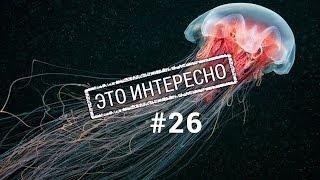 Это интересно 26: Интересные и необычные факты о медузах