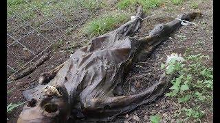 ФЕРМА МЕРТВЫХ (реальная история) The Dead Body Farm. Интересные факты