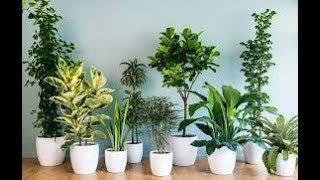 Названы пять самых вредных комнатных растений