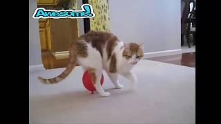 Это же просто Надувательство считают кошки! интересное смешное видео прикол домашние животные питомц