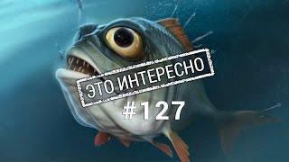 Это интересно 127: Топ 10 самой Дорогой рыбы. Интересные факты о рыбе