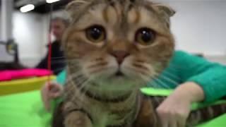 """Выставка-продажа котят """"КоШарики Шоу"""". 10 - 11 февраля 2018. Сокольники."""