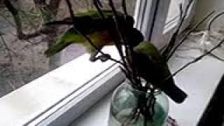 попугаи изучают природу