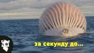 8 САМЫХ СТРАННЫХ ВЗРЫВОВ [Белый кот]