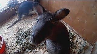 В зоопарке родился кенгуренок