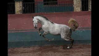 Motivation || Equestrian Sport