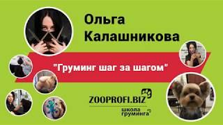 Ольга Калашникова. Обучение грумингу. Груминг шаг за шагом