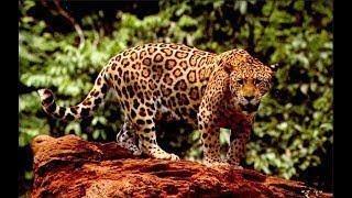 Животные саванны Выживание Дикая природа Документальный фильм National Geographic