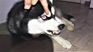 Приколы с животными 2018 Как говорят животные Подборка Приколов про собак Собаки funny dog video