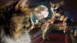 Неразгаданные тайны Кошек. Интересные факты. Тайны мира. Документальные фильмы