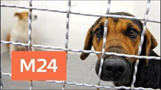 Жители Тушино обеспокоены подозрительной ветеринарной клиникой- Москва 24