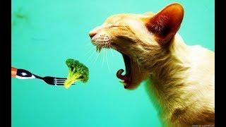 Самые интересные факты о кошках