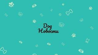 Dog Новости/Самые свежие новости от Космоса#3/Eleonora Li Pets