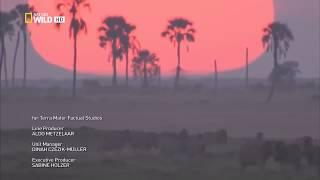 Дикая природа и животный мир Калахари сезон миграции
