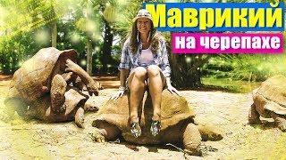 Маврикий - верхом на огромной черепахе. Парк Ля Ваниль. Mauritius 2018