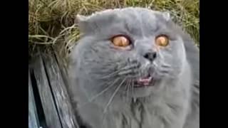 Кошки разговаривают с людьми.