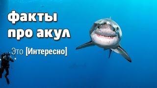 Это интересно 498: Интересные факты про акул