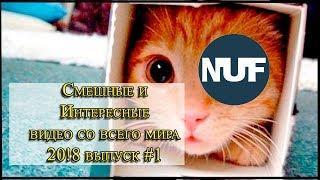 Смешные видео / ЮМОР / Видео подборка / Интересное / Новые серии re. #1