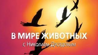 В мире животных с Николаем Дроздовым. Выпуск 8 (2017)
