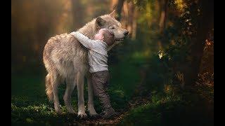 Животные, подобно людям, спасают друг друга.