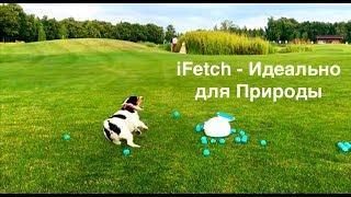 iFetch и раздолье на природе