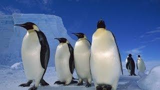 Дикая Антарктика Wild Antarctica 2015 Мир Животных Документальные фильмы Документальные фи