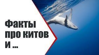 Киты, дельфины и ... | А вы знали про это? Интересные факты | Видео ко дню китов 23 июля