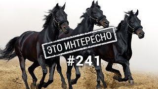 Это интересно:Самые невероятные факты о лошадях