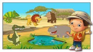 Мультики для Детей. Животный Мир. Сказки и Рассказы