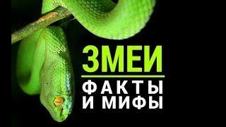 Змеиные факты и мифы.