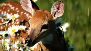 Вот такая природа/ Эти животные такие милые)))