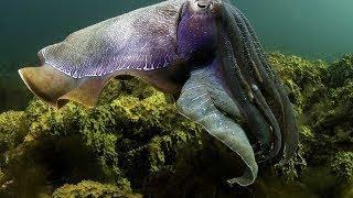Дикая природа Багамы Морские животные Документальный фильм National Geographic