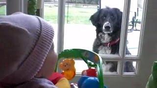 Дети разговаривают с собаками
