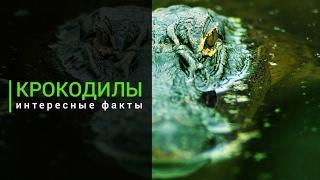 Это интересно 693: Крокодилы: Интересные факты