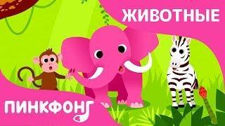 Животные, Животные! | Песни про Животных | Пинкфонг Песни для Детей
