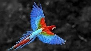 Джунгли Мир Животных и Дикой природы Документаль