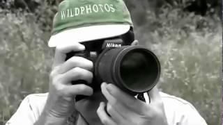 Дикая природа Африки  Нападения животных  Документальный фильм