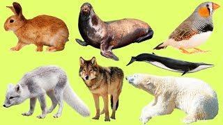 Животные для детей | Полярные животные | Учим название и звуки Полярных Животных | Учим животных