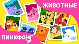 Семьи Животных | Песни про Животных | Пинкфонг Песни для Детей