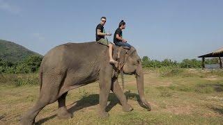 Таиланд. Слоны. Часть 1