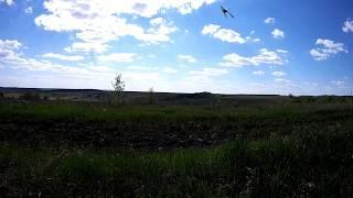На природе - поле / In nature - field