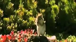 Животные поют, танцуют и разговаривают