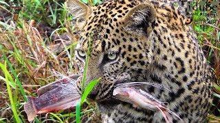 Уникальные съёмки дикой природы и выходок животных по всему миру охота хищников спасения жертвы