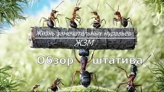 Обзор штатива & Жизнь замечательных муравьёв.ЖЗМ