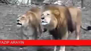 знамения!!! Животные говорят Аллаh!!!
